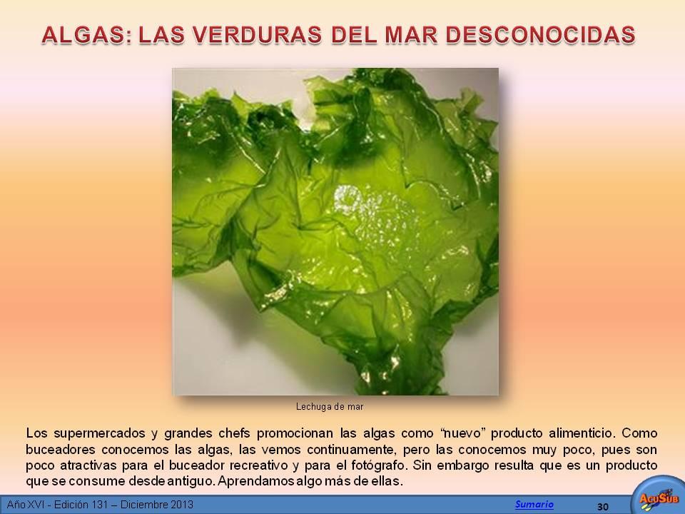 Algas: Las verduras del mar desconocidas