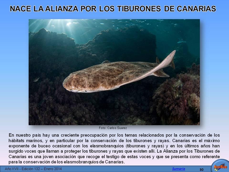 Nace la Alianza por los Tiburones de Canarias