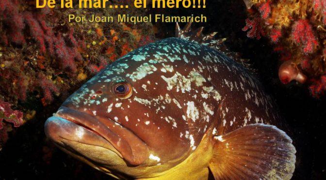 De la mar…. el mero!!! por Joan Miquel Flamarich